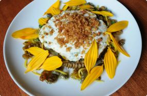 Braised Sunflowers w/ Herbed Ricotta