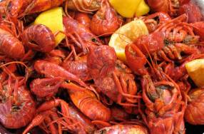 Boiling, Peeling & Eating Crawfish