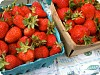 Tips on Strawberry Picking & Freezing