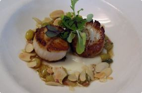 Seared Scallops with Cauliflower Veloute