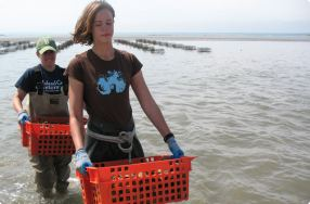 Island Creek Oysters Farm Tour