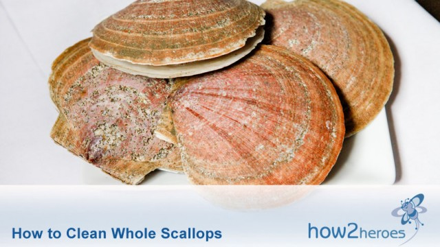 how2heroes » How to Clean Whole Scallops