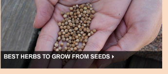 Best Herbs to Grow from Seeds