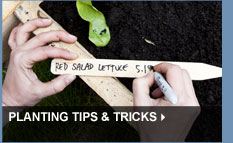 Planting Tips & Tricks