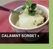 Calamint Sorbet