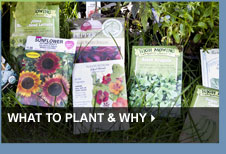 What to Plant & Why